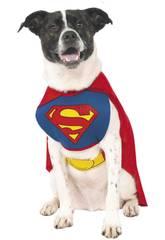 Deguisement Mascotte Superman taille XL Rubies 887892-XL