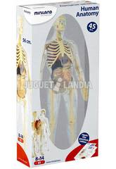 Juego Anatomía Humana Miniland 99060